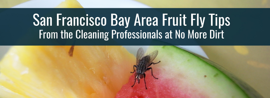 Tips for Businesses Dealing with Fruit Flies in the San Francisco Bay Regions