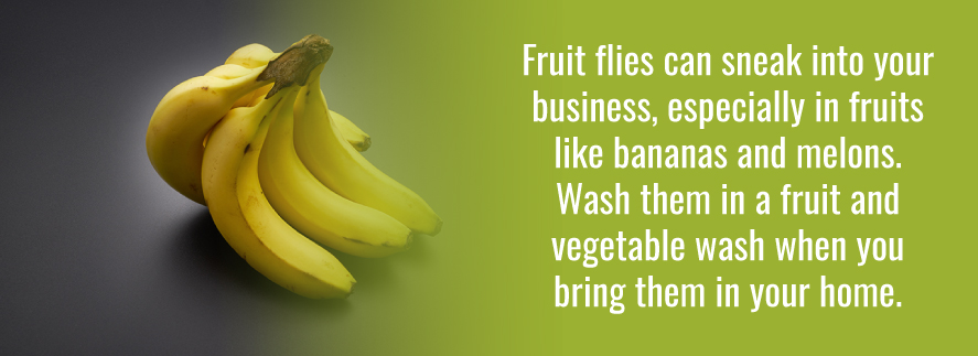Fruit flies can sneak into businesses in things like bananas and melons.